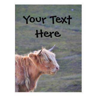Schönes Kuh-Vieh-Färsen-langes Haar-langes Horn Postkarte