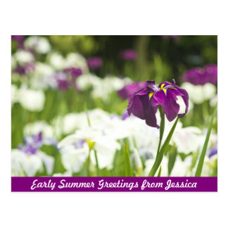 Schönes lila violettes Indigo-weißer Iris-Garten Postkarte