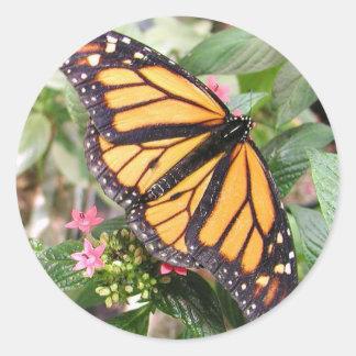 Schönes Monarch-Schmetterlings-Foto Runder Aufkleber