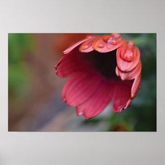 Schönes Nahaufnahme-Blumen-Foto Poster