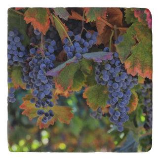 Schönes Weinberg-Wein-Land Toskaneres Trivet Töpfeuntersetzer