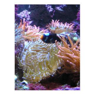 Schönheit Unterwasser Postkarte