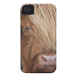 Schottische Hochland-Kühe - Schottland iPhone 4 Hüllen