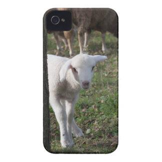 Schüchternes Lamm iPhone 4 Cover