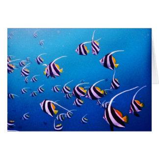 Schule der Fische, Banda Neira Mitteilungskarte