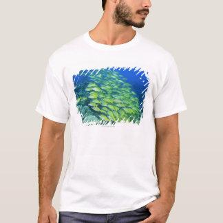 Schule der Schwimmen bluelined Rotbarsche T-Shirt