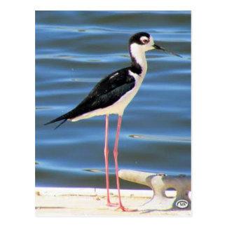 Schwarz-necked Stelze-Postkarte Postkarte