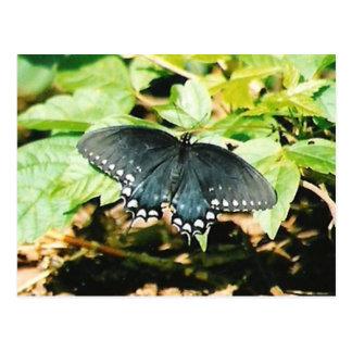 Schwarz-weiße Frack-Schmetterlings-Foto-Postkarten Postkarte