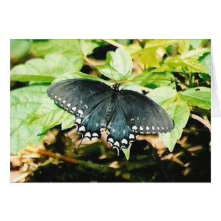 Schwarz-weiße Frack-Schmetterlings-Gruß-Karten Karte