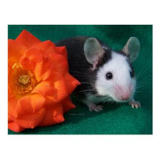 Schwarz-weiße Maus und orange Tee-Rose Postkarte