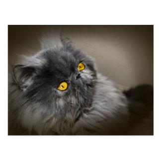 Schwarze flaumige Katze mit orange Augen Postkarte