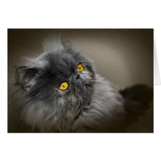 Schwarze flaumige Katze mit Orange mustert leeren Karte