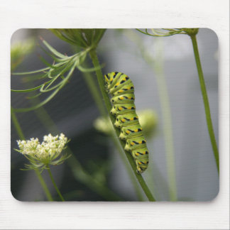 Schwarze Frack-Raupe (parsleyworm) auf verdünntem Mousepad
