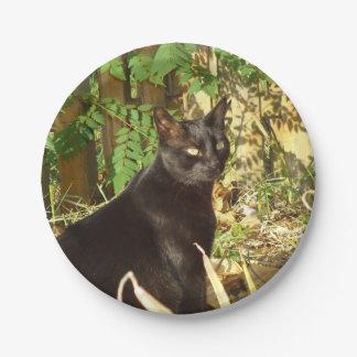 Schwarze Katzen-Morgen Sun Pappteller 17,8 Cm