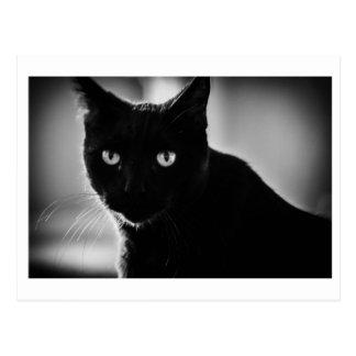 Schwarze Katzen-Postkarte Postkarte