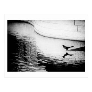 Schwarze Krähe mit Reflexion auf Wasser - Foto Postkarte