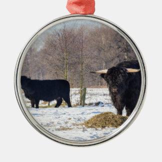 Schwarze schottische Hochländer im Winterschnee Silbernes Ornament