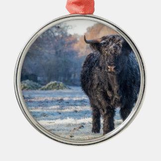 Schwarze schottische Hochländerkuh in der Silbernes Ornament