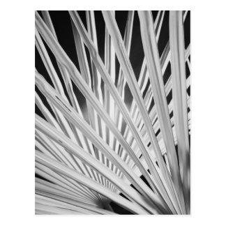 Schwarze u weiße Ansicht der Palmewedel Postkarten