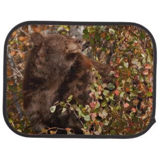 Schwarzer Bär, der nach Herbstbeeren sucht Automatte