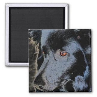 Schwarzer Border-Collie-Gesichts-Hundemagnet Quadratischer Magnet