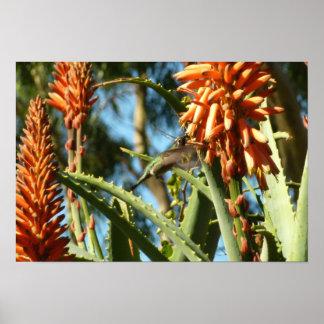 Schwarzer-Chinned Kolibri im Flug Poster