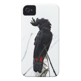 SCHWARZER COCKATOO QUEENSLAND AUSTRALIEN iPhone 4 Case-Mate HÜLLE