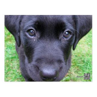 Schwarzer Labrador-Hund auf Gras Postkarte