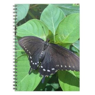 Schwarzer Polydamas Schmetterling Notizblock