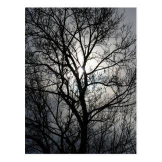 Schwarzer und grauer Baum Postkarte