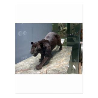 Schwarzes Jaguar (Panthera onca) Postkarte