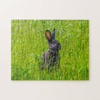 Schwarzes Kaninchen im Gras-Fotopuzzlespiel