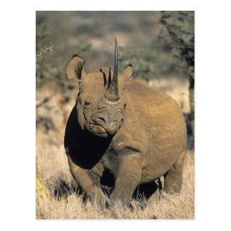 Schwarzes Rhinocerous, (Diceros bicornis), Nord Postkarte