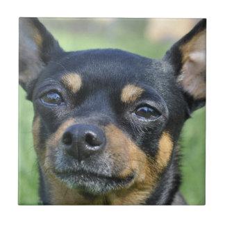 Schwarzes und Brown-Chihuahua-Fliese