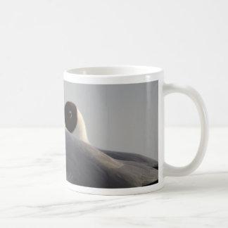 schwarzköpfige Möve Kaffeetasse