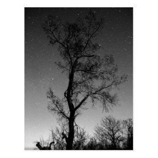 Schwarzweiss-Baum nachts Postkarte