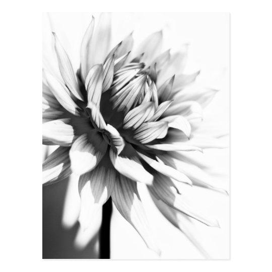 Schwarzweiss-Blumen-Postkarte Postkarte | Zazzle.ch
