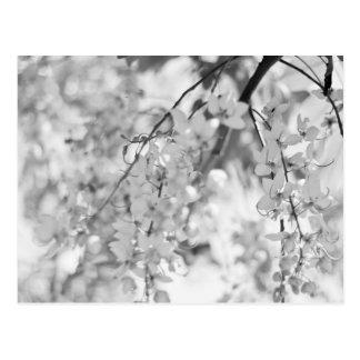 Schwarzweiss-Blüten-Niederlassung Postkarte