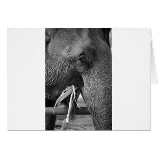 Schwarzweiss-Elefant-Fotopostkarte Karte