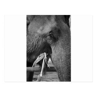 Schwarzweiss-Elefant-Fotopostkarte Postkarte