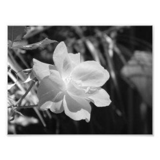 Schwarzweiss-Foto-Druck Foto Druck