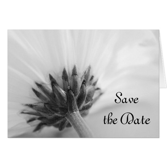 Schwarzweiss-Gänseblümchen, das Save the Date Karte