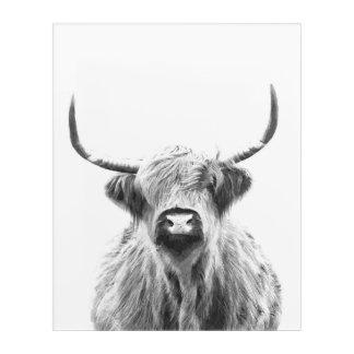Schwarzweiss-Hochland-Kuh Acryldruck