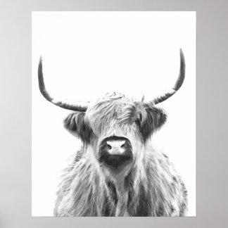 Schwarzweiss-Hochland-Kuh Poster