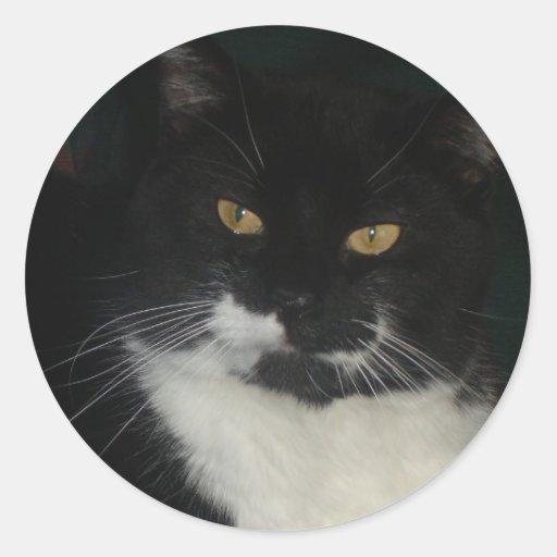Schwarzweiss-Katzen-Aufkleber