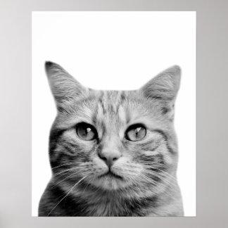 Schwarzweiss-Katzenhaustiertier-Foto-Kinderzimmer Poster