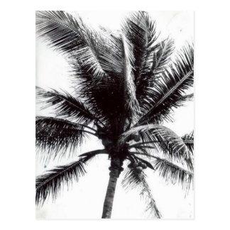Schwarzweiss-Palme Postkarte