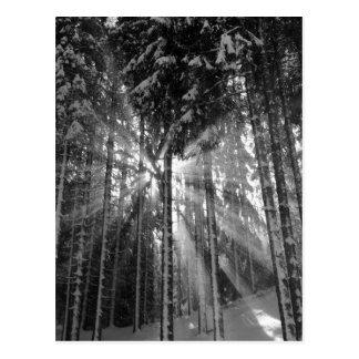 Schwarzweiss-Winter-Märchenland Postkarte