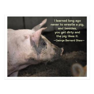 Schwein-Klugheit - Wringen Postkarte