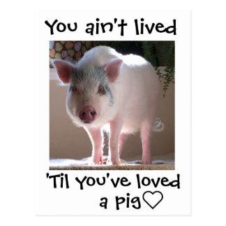 Schwein lovin postkarte